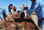 Women working on a raised bed at Insight Garden Program's largest garden to date in the Central Valley.